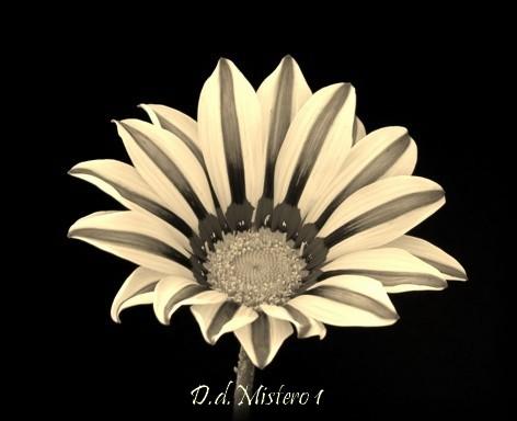 http://digilander.libero.it/Donna.Del.Mistero1/Mistero./fiore%201.jpg