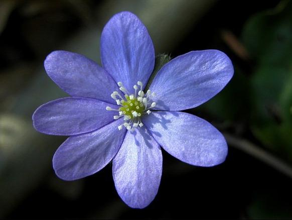 Galleria fotografica di elisa bistocchi fiori e piante for Fiori immagini e nomi