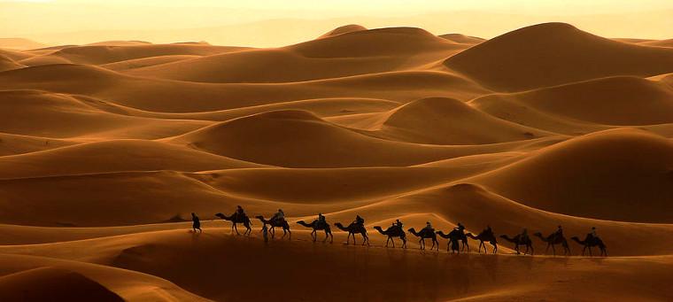 Marrakech-camels-desert