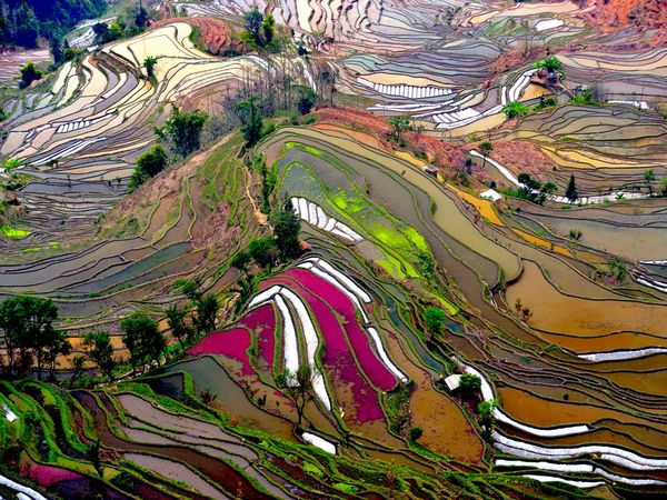 Terraced rice field. NG