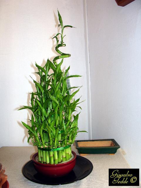Il giardino di giusalvo for Canne di bamboo da arredo