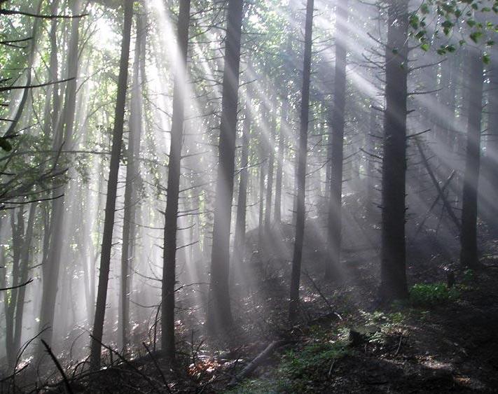 Foresta Di Luce