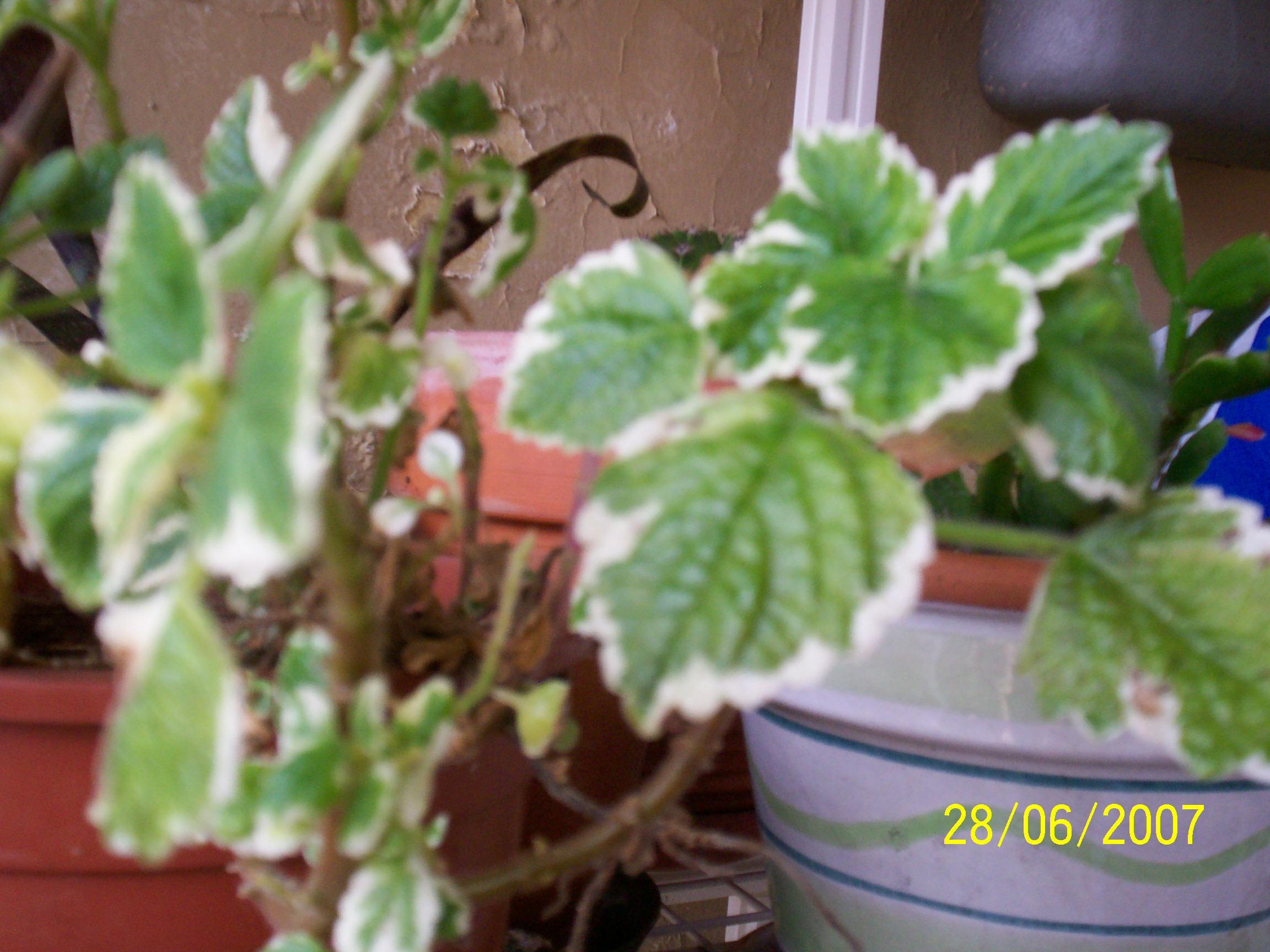 Le mie piante for Bacche rosse nomi
