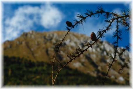 Monte Palia...