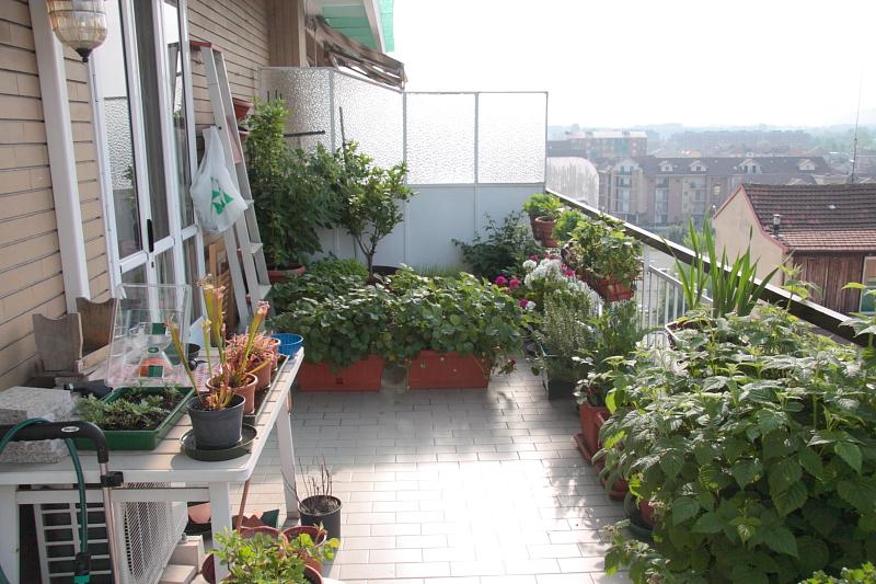 Nuove piante sul terrazzo | Forum di Giardinaggio.it