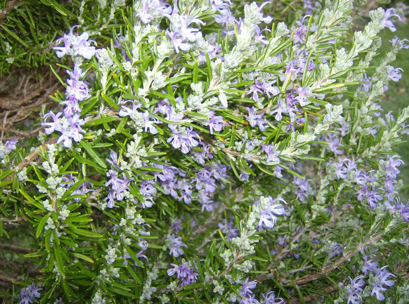 Fiori da giardino pictures - Fiori particolari da giardino ...