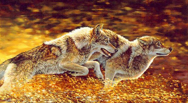 donne che corrono coi lupi ebook