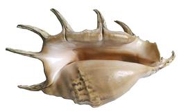 SirenettaLaura
