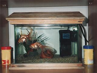 V p h o t o il vero viaggio di s for Vaschetta per pesci rossi prezzi