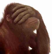 [Immagine: scimmia.jpg]