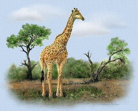 I record degli animali - Immagini di marmellata di animali a colori ...