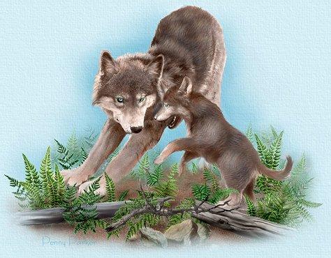 Bajkal kir e laika u si fa presto a dire cani anti lupo cani