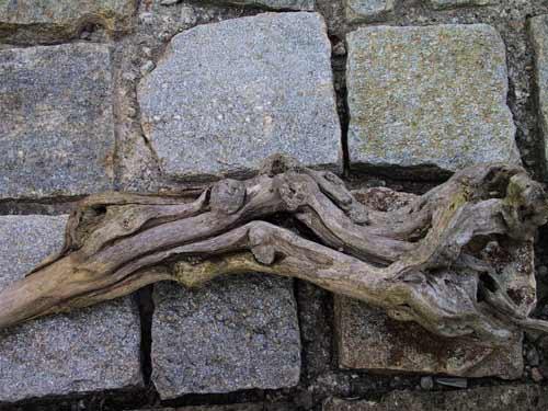 Legnaia in acquario ovvero acquariforum for Legni per acquario