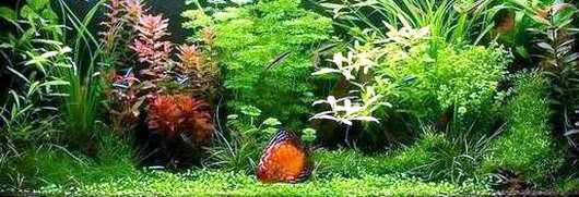 4 acquari for Arredamento acquario dolce