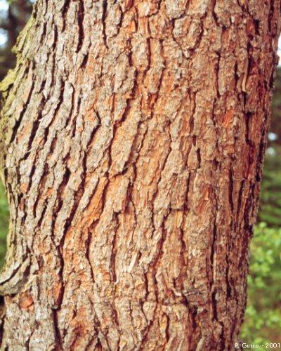 Corteccia di pino offerte