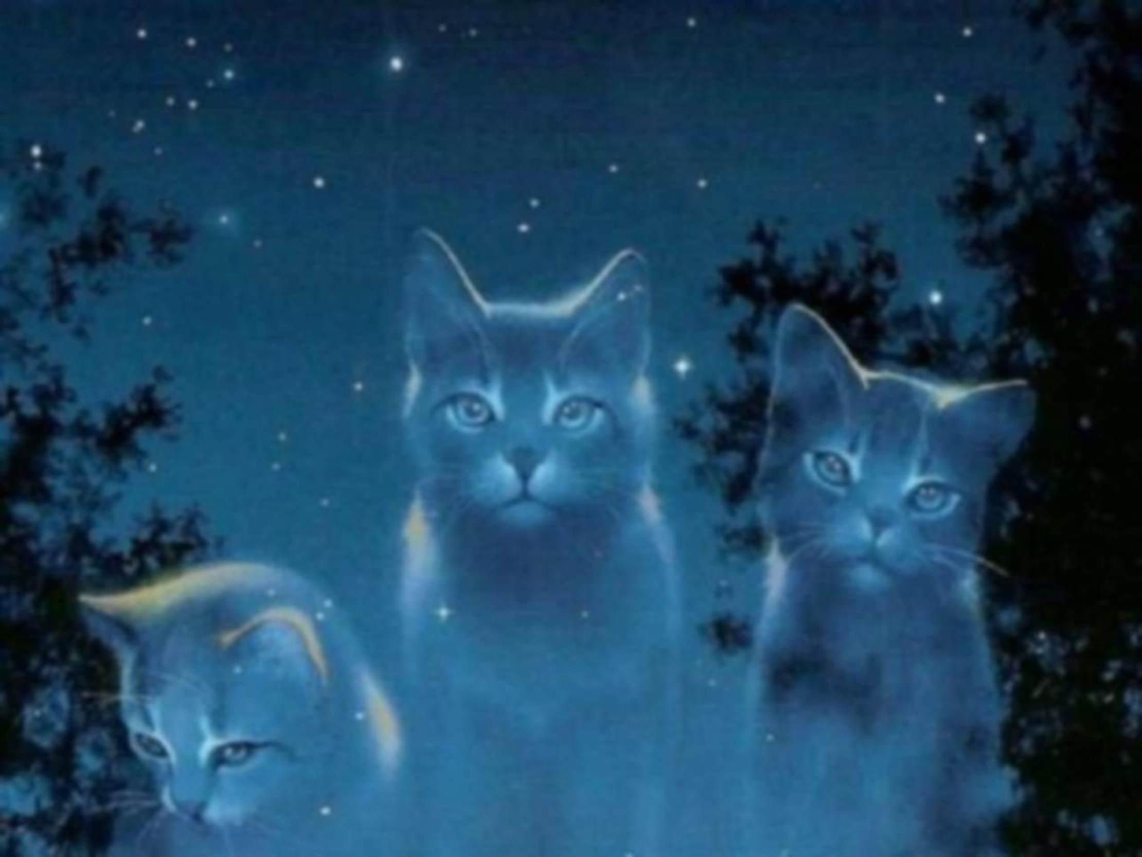 Anima gatti