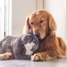NON ABBANDONARE GLI ANIMALI...POTREBBERO NON SOPRAVVIVERE