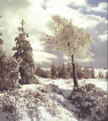 Fisica Facile - La neve