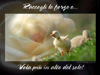Un p di saggezza orientale su philocalia - Immagini del cardellino orientale ...
