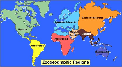 palearctic region and their relationship with