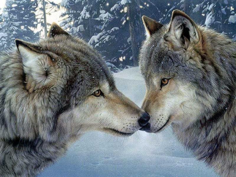 Lupi - Il coraggio dell'amicizia
