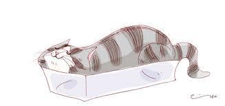 gatto_trasloco