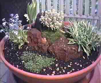 Il calaf giardino in miniatura - Giardino in miniatura ...