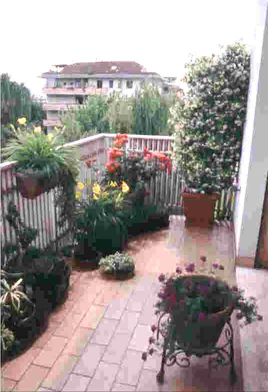 La Calaf-piante in terrazzo