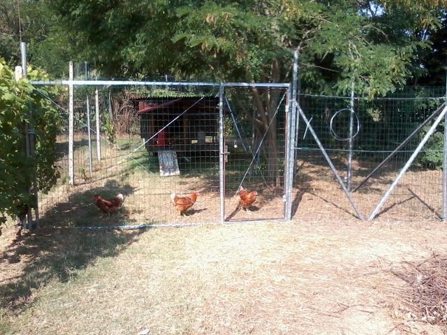 Pollaio mobile fai da te offgrid for Box per cani in muratura