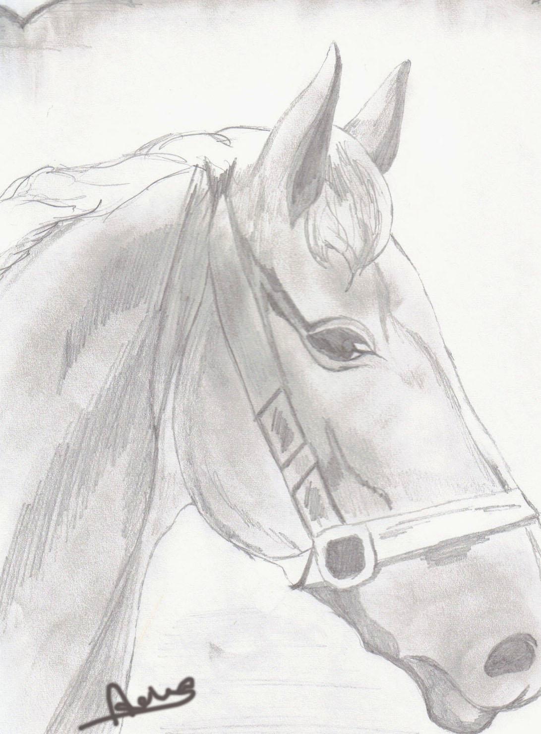 Disegni di cavalli disegni dei cavalli da colorare disegni for Disegni di cavalli a matita