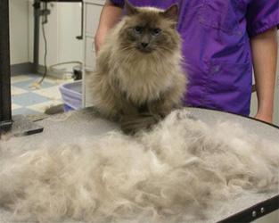 Spazzola miracolosa per cani e gatti elimina il sotto pelo