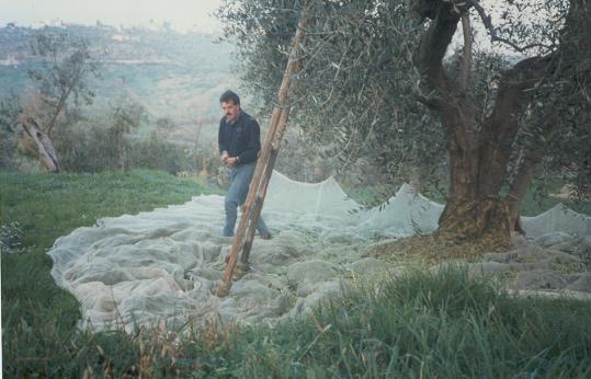 Chi in vendicatori ha sollevato un martello Torah