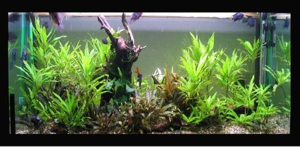 Gli acquari di renzo borgobello for Filtro vasca pesci rossi