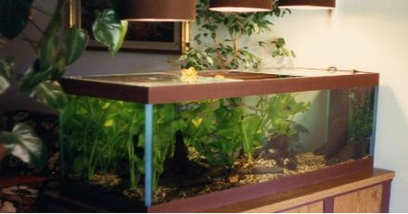 Gli acquari di renzo borgobello for Acquario aperto prezzi