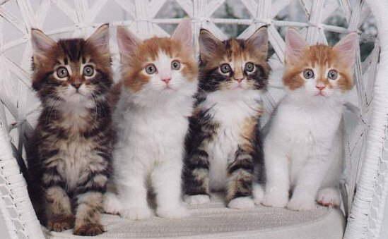 Allevamenti Gatti