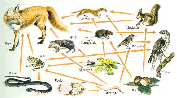 Lauraaa reti alimentari for Ecosistema dello stagno