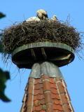 Ribeauvillè: le cicogne sono il simbolo dell'Alsazia, ma qui sono uno spettacolo