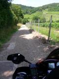 A nord-est di Ribeauvillè. La Multi non si ferma neppure davanti agli sterrati