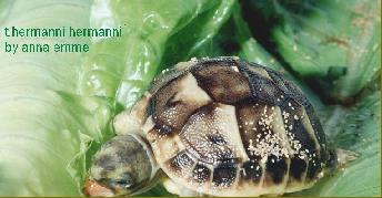 Ediflip tartarughe neonate2 for Contenitore per tartarughe