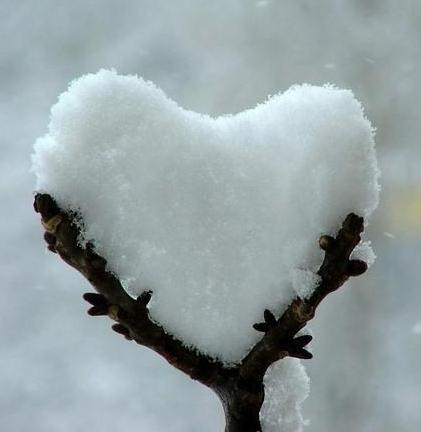 cuore neve