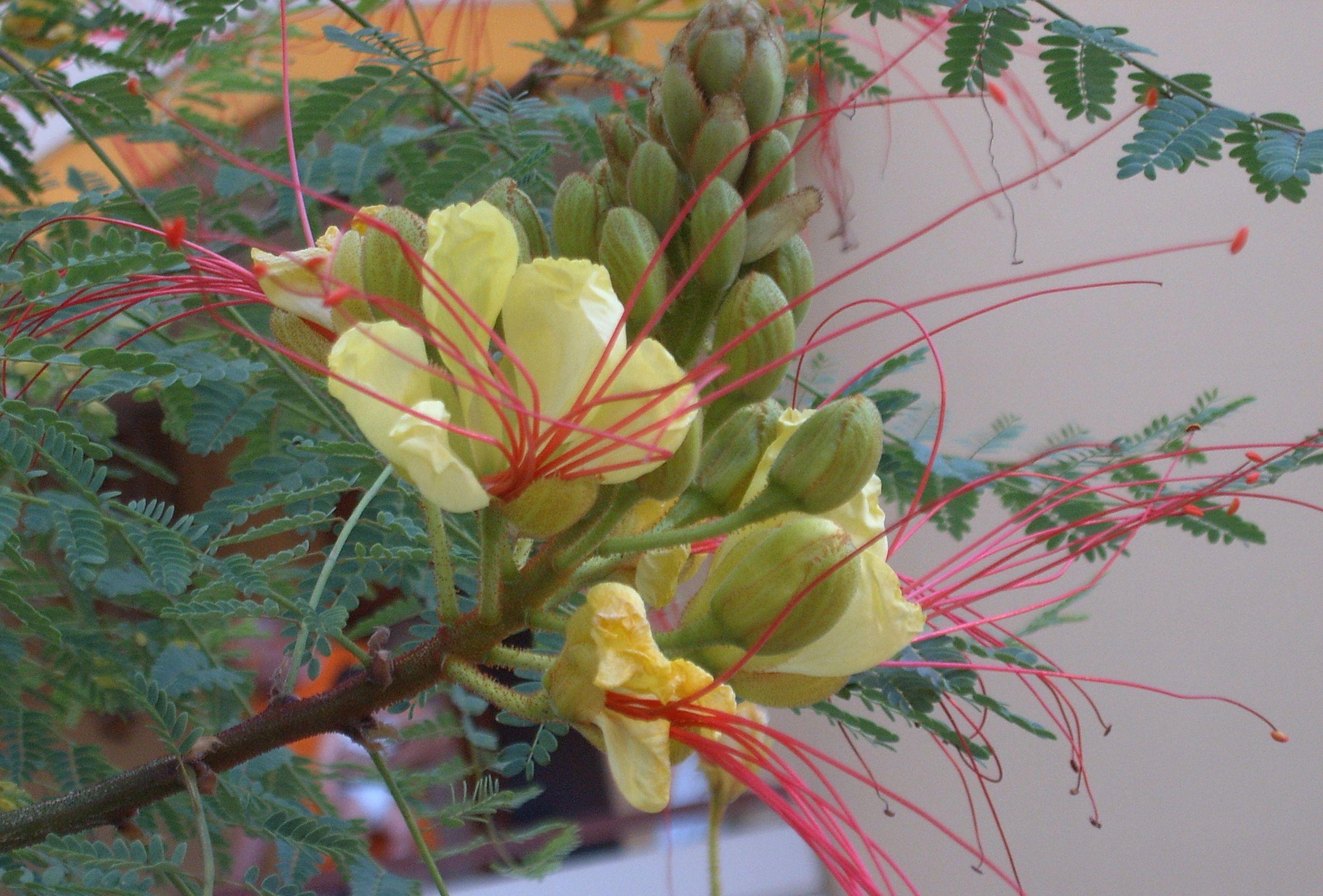 elliy-fiori