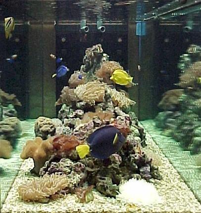 Exotic life for Acquario marino in vendita