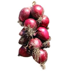 Cipolla rossa di tropea calabria igp indicazione for Semina cipolle