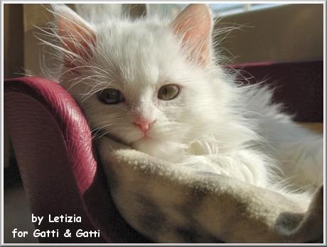 ciao sono sempre qui, non me ne sono andata, ho dovuto fare tante cose...studiare...scrivere...spesa........pranzetti, oramai è notte, ho cercato in immagini: il gatto più bello del mondo e ho trovato ...lei (?)...si lei, mi sembra che si chiami