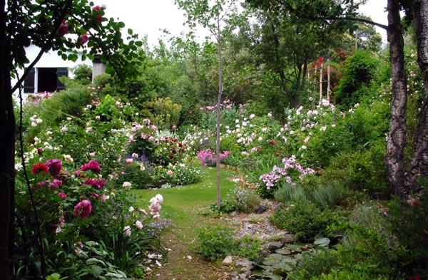 Continua il tour fotografico compagnia del giardinaggio - Giardino con rose ...