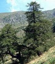 Falegnameria Marino Giacomino - Oglianico (Torino)