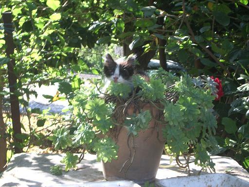 gatto carlo bramanti
