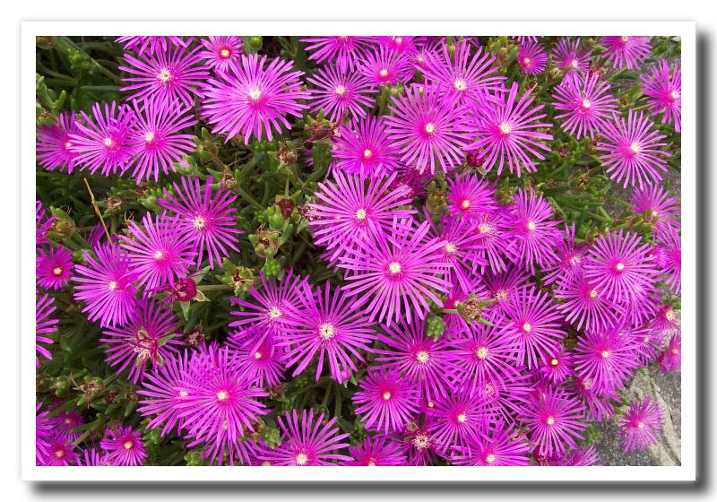 Fiori di primavera - Fiori di giardino foto ...