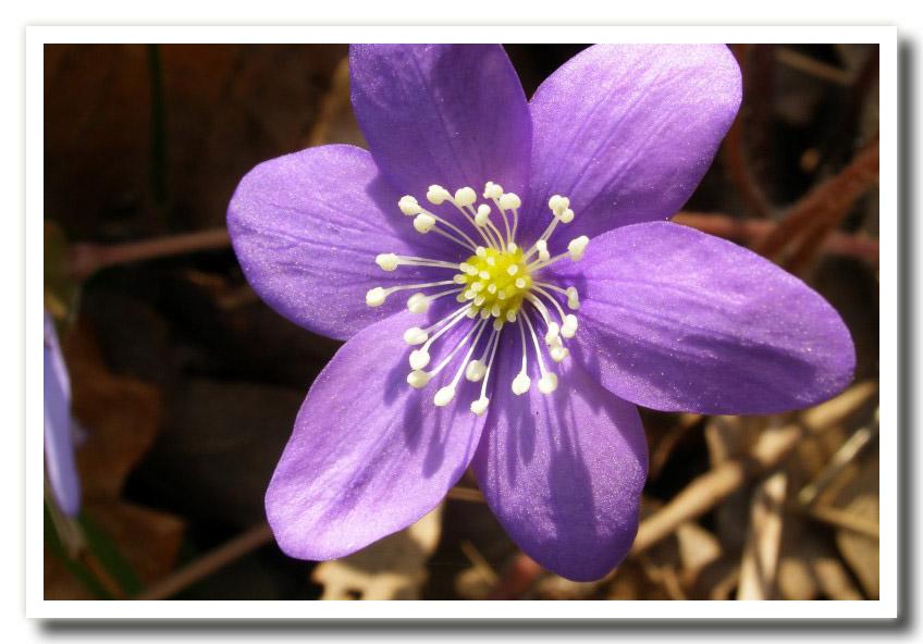 Fiori di primavera for Tipi di fiori