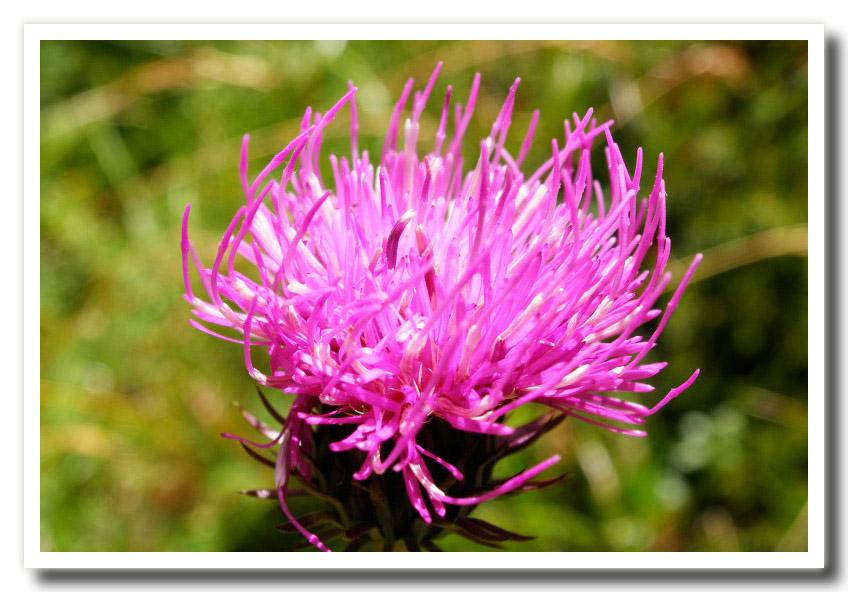 Fiori di primavera for Fiori immagini e nomi